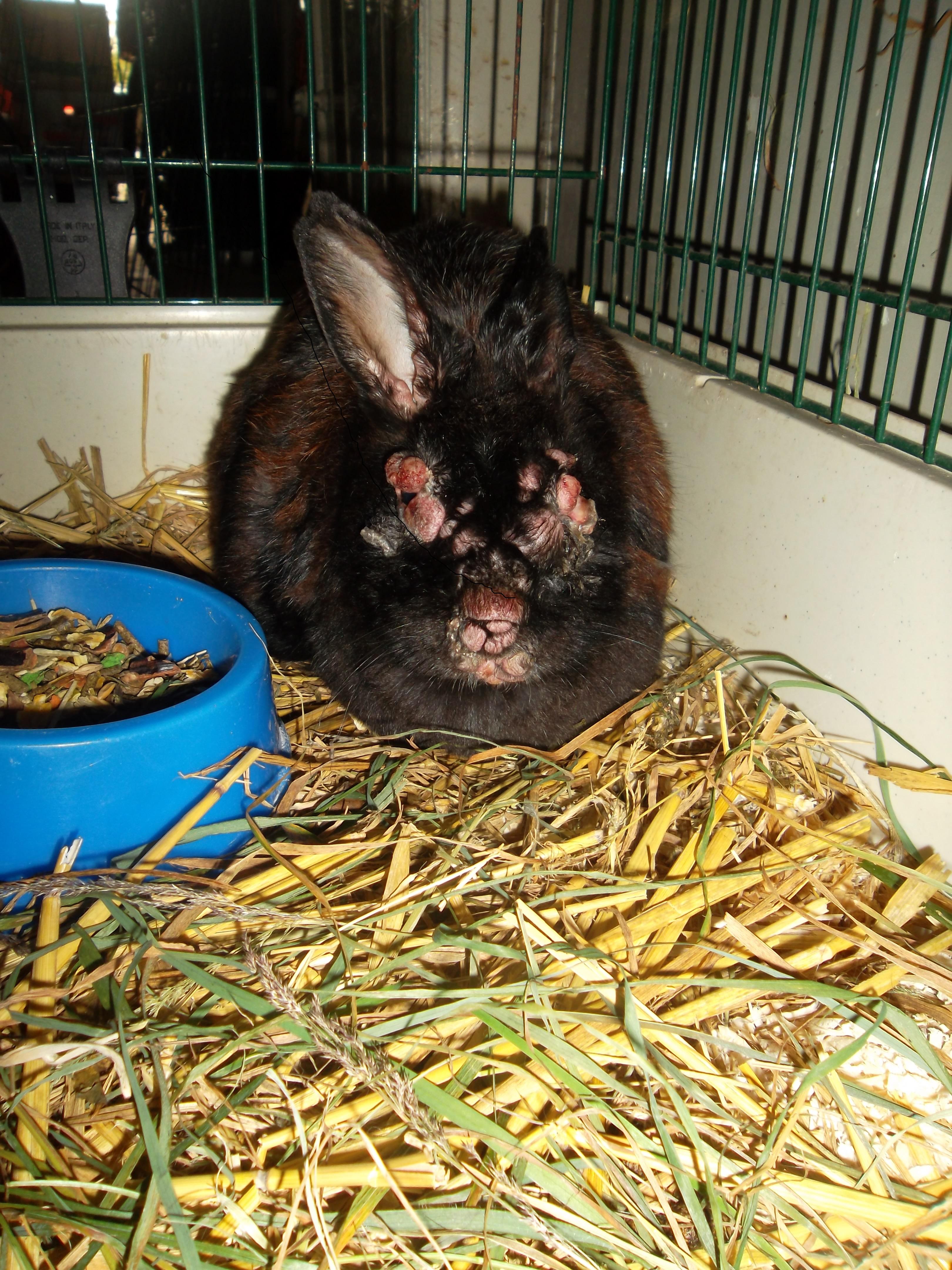 hoe bekijk je slijmvliezen van een konijn