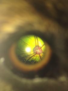 netvlies directe opthalmoscopie